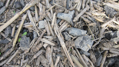 Photo: Biochar mixed with rice straw