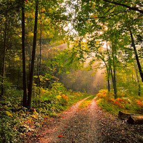 Autumn morning by Rafael Kos - Landscapes Forests ( forest, morning, rays )