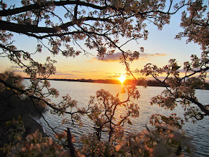 Photo: Pear blossoms and sunset over a lake at Eastwood Park in Dayton, Ohio.
