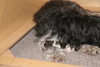 Photo: Toffie spielt derweil 'Mama-Beschwerer' - ja nicht aufstehen!