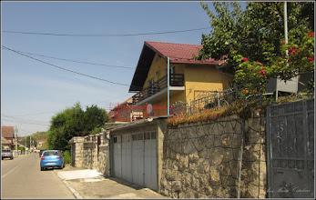 Photo: Sedum spurium - din Turda, Str. Salinelor - 2019.07.27