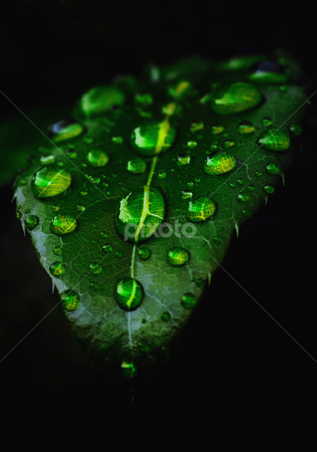 Leaf after rain by Sam Long Fee - Nature Up Close Leaves & Grasses