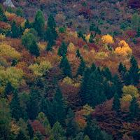 l'autunno nelle Dolomiti di