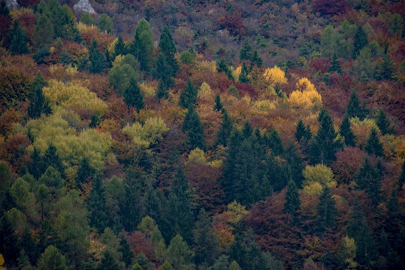 l'autunno nelle Dolomiti di walterferretti