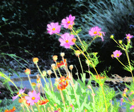 Photo: Smudge stick (5/14/6) - cosmos and gaillardia