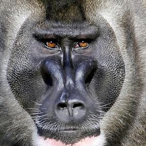 Drl Portrait by Elke Krone - Animals Other Mammals (  )