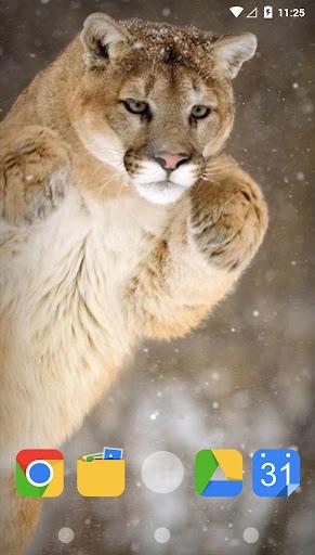 冬季生活的动物
