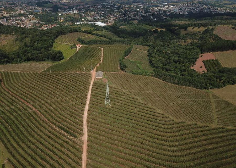 A propriedade em Jarinu-SP é a responsável pela exportação de pêssegos brasileiros. (Fonte: Irmãos Parise/Rodrigo Parise/Reprodução)