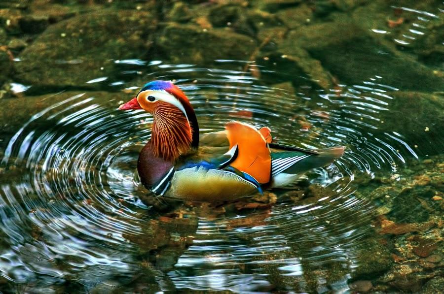 by Kim He Roe - Animals Birds (  )