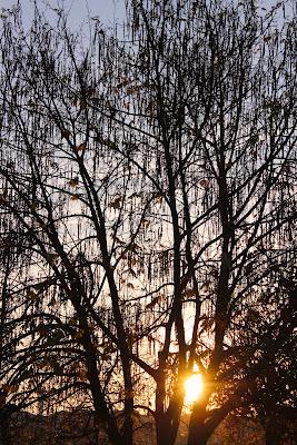 Where is the sun? di Joonie94