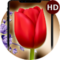 Tulip Flower Clock Live Wallpaper-HD Flower Themes APK