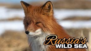 Russia's Wild Sea thumbnail