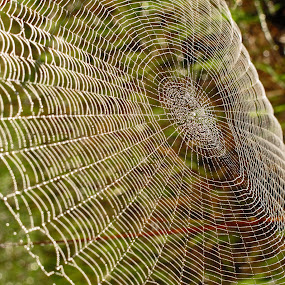 Patterns in a web by JoAnn Palmer - Nature Up Close Webs ( patterns, nature, web, spider, spider web )