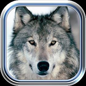 Волки Долина