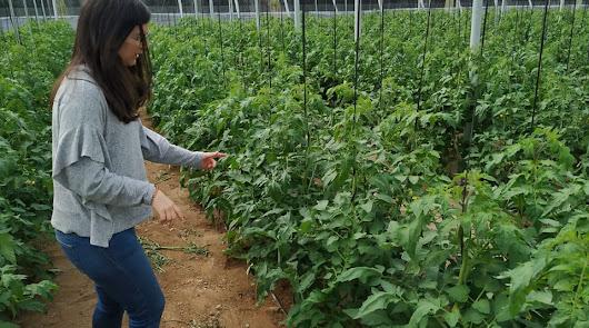 Vellsam desarrolla un microorganismo que equilibra el crecimiento de la planta