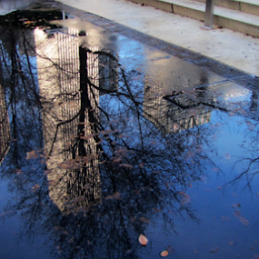 by IS Photography - City,  Street & Park  City Parks ( reflection, winter, ice, street, buildings, trees, chicago )