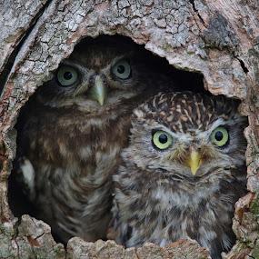 Hoot are you by Wilson Beckett - Animals Birds (  )
