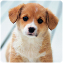 Puppy Wallpapers icon