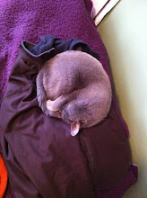 Photo: Euclid takes over the jacket.