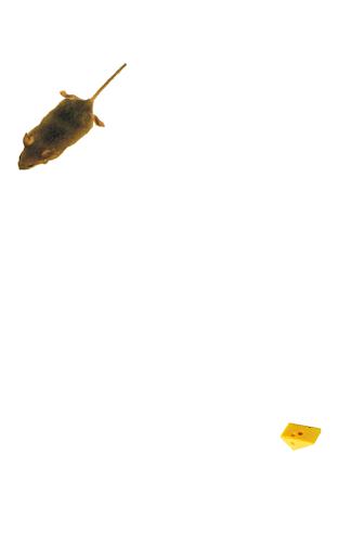 Mouse simulator: game for cat filehippodl screenshot 8