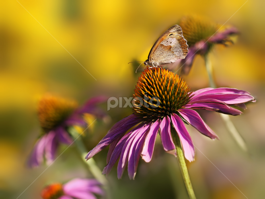 Floral field by Nikola Vlahov - Nature Up Close Flowers - 2011-2013 ( field, up close, nature, showy, petals, bokeh, flower )