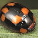 Blessed Leaf Beetle