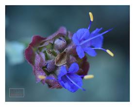 Photo: Eastern Sierras-20120715-240