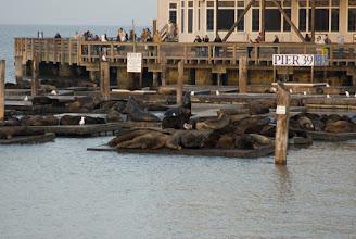 Photo: Sea lions at pier 39