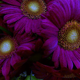 by Denise O'Hern - Flowers Flower Arangements