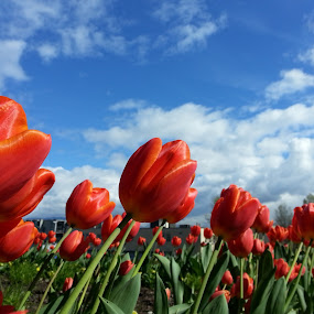 by Branimir Ficko - Flowers Flower Gardens