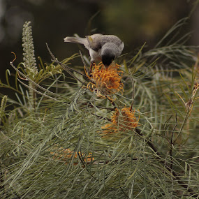 EatFlower by Luiz Michelini - Animals Birds