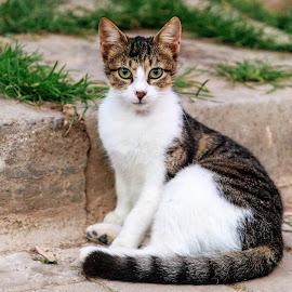 by Veli Toluay - Animals - Cats Portraits