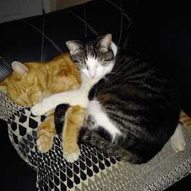 Soul Mates by Karen Carter Goforth - Uncategorized All Uncategorized ( cats, mates, sleeping )