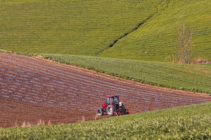 Terre coltivate di si