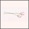 美しさの開花