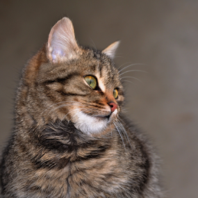 YOUNG CAT by Dragutin Vrbanec - Animals - Cats Portraits
