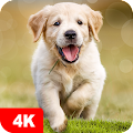 Dog Wallpapers & Puppy Backgrounds APK