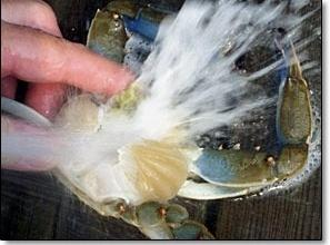 This section is for all types of crabs. In a large mixing bowl, cover...