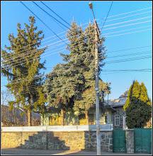 Photo: Conifere - de pe Str. Mihai Eminescu - 2017.02.13