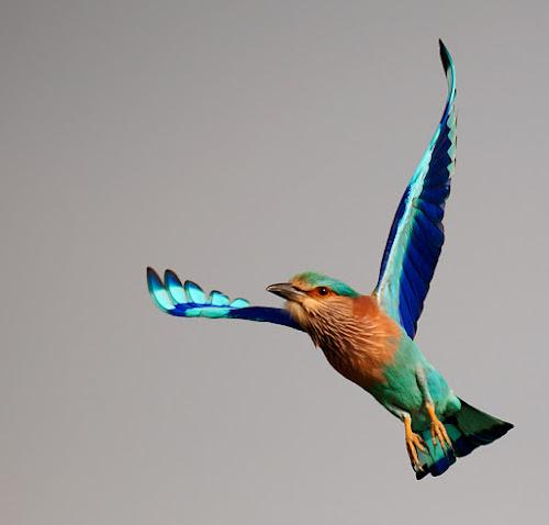 by Sathya Vagale - Animals Birds