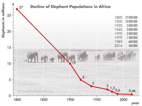 african elephant human population