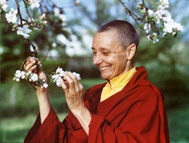 Tenzin Palmo – Một nữ Du-già nơi xứ tuyết