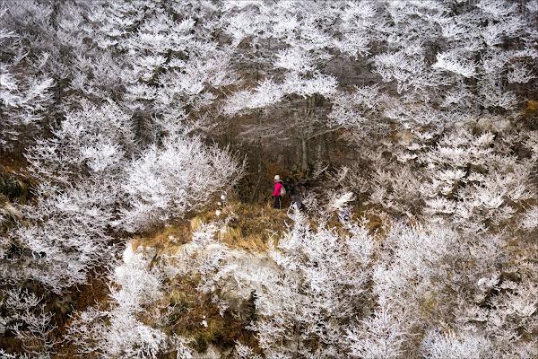 Ice bloom di alberto raffaeli