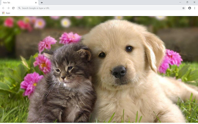 Cute Cats & Dogs Wallpapers and New Tab