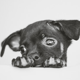 Mr Viet by Thomas Jeppesen - Animals - Dogs Portraits ( blackandwhite, b&w, hanoi, bw, vietnam, dog, portrait )