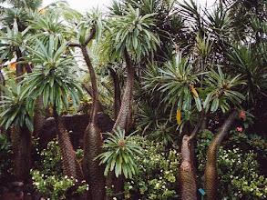 Photo: #015-Jardin botanique de Deshaies