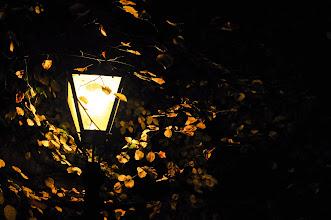 Photo: Flurry of Light