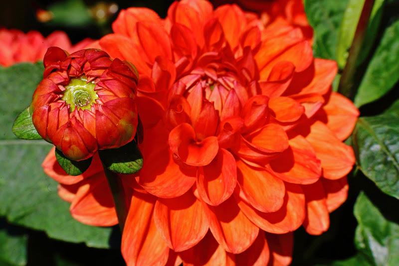 fiorellino e fiorellone di SALVATORE PETRENGA
