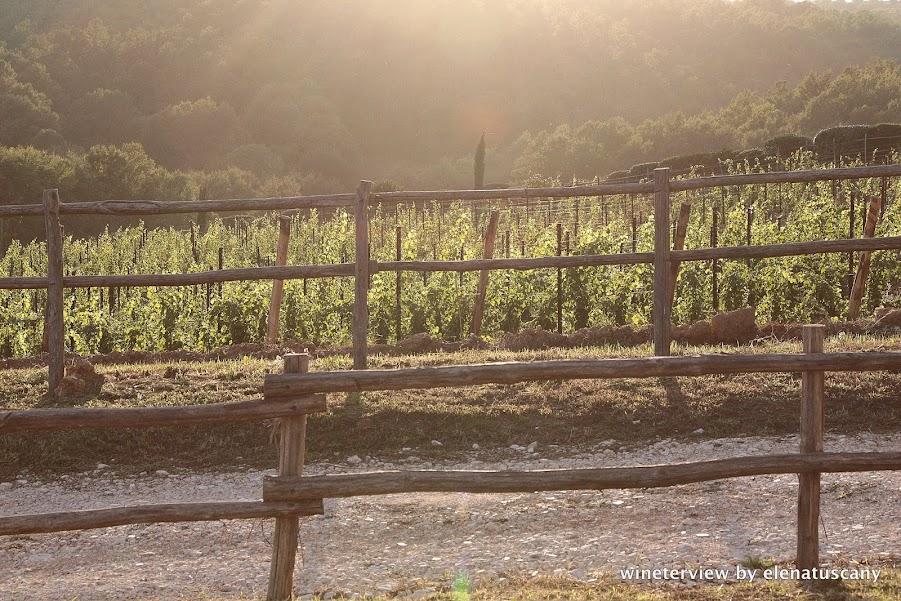 vini montauto, montauto wine, maremma wine, tuscan wine, comune manciano, winery, manciano vino, vigneto tramonto, toscana vigneto, vigna, vineyard tuscany, vineyard sunset