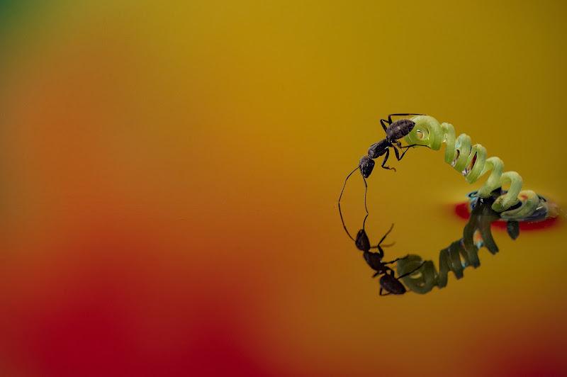 la formichina di massimo zanotti